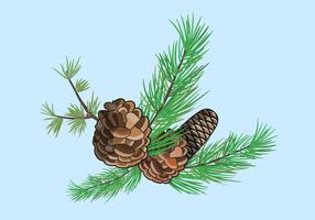 Illustration Pine vecteur Cônes