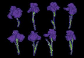 Vecteurs Iris fleurs