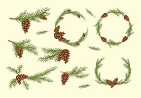 Conos del pino Vector