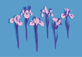 Flores del iris del vector