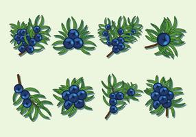 Juniper Berries Vector Icons