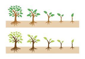 Wachsender Baum mit Wurzeln Vector
