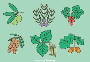 Vector de hierbas y especias de plantas