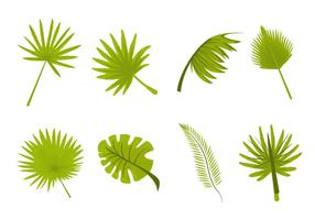 Tropical Leaves Palm Vector