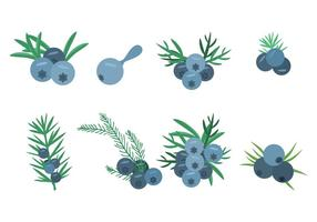 Free Juniper Icons Vector Illustration