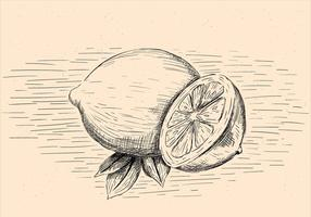 Free Hand Drawn Vector Lemon Illustration