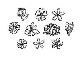 Flores livre mão desenhada Vector
