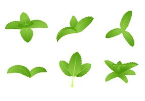 vettore di stevia verde