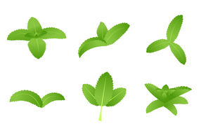 Green Stevia Vector