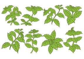 set vettoriale di foglia di stevia
