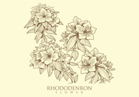 Free Hand Drawn Rhododendron Flower Vectors