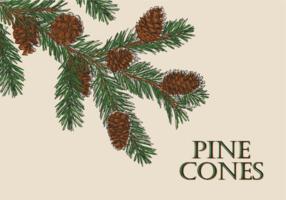 Free Hand Drawn Pine Cones Vectors