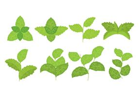 Icone di Stevia