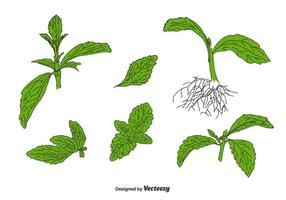 set vettoriale di stevia