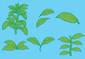 Stevia leaf hand drawn illustration set