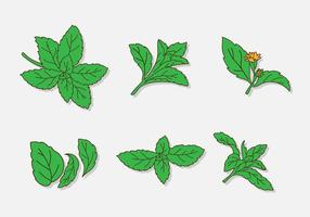 Cartoon Green Stevia Leaf