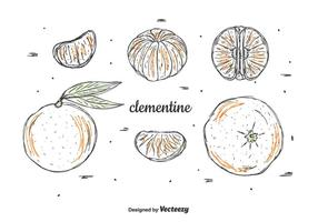 Hand Drawn Clementine Vector Set