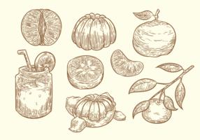 Mano libre dibujado vector de la clementina