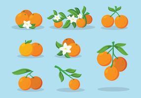 Clementine, fruta, vetorial