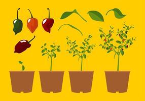 Habanero Växt Gratis Vektor