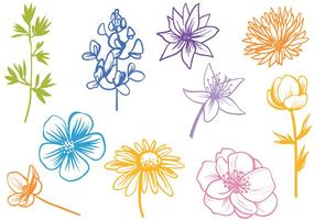 Gratis Wildflower Vectoren