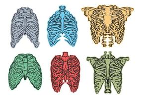 Ribcage sketch vector set