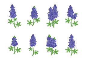 Bluebonnet Flower Vectors