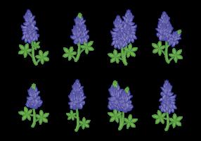 Bluebonnet flor vectores