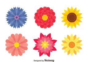 Beautiful Flowers Collection Vector