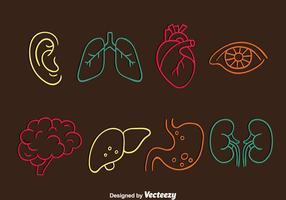 Menschliche Orgel Linie Icons Vektor