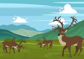 Caribou On The Hills Vector