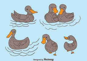 Mano Dibujado Loon Duck Vector