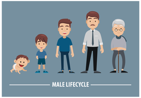 Male Lifecycle Vector