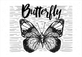Free Hand Drawn Vector Butterfly Illustration