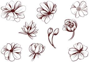 Gratis Vintage Gedetailleerde Bloemenvectoren vector