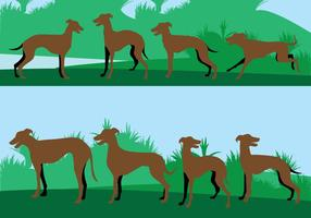 Whippet dog illustration