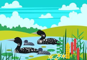 Loon Bird Family In The Lake