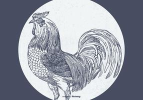 Vintage skissad rooster illustration