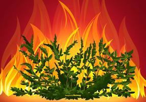 Burning Bush Illustration