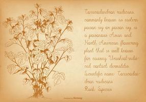 Illustrazione di edera velenosa vintage