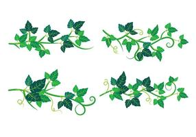 Set of Poison Ivy Plant vector