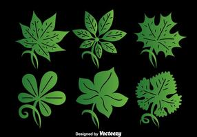 Green Ivy Leaf Collection Vector