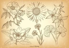 Weinlese-Blumen-Sammlung