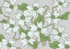 White Dogwood Vector