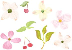 Free Dogwood Flowers Leaves Vectors