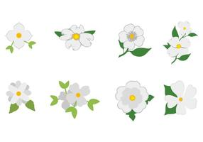 Free White Dogwood Icon Vektor