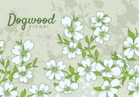 Free Hand Drawn Dogwood Flowers