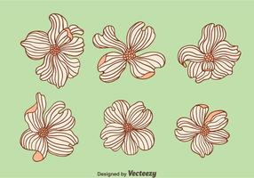Hand Drawn Dogwood Flowers Vector