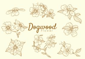 Hartriegel Blumen