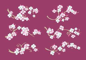 Set of Dogwood Flowers on Maroon Background